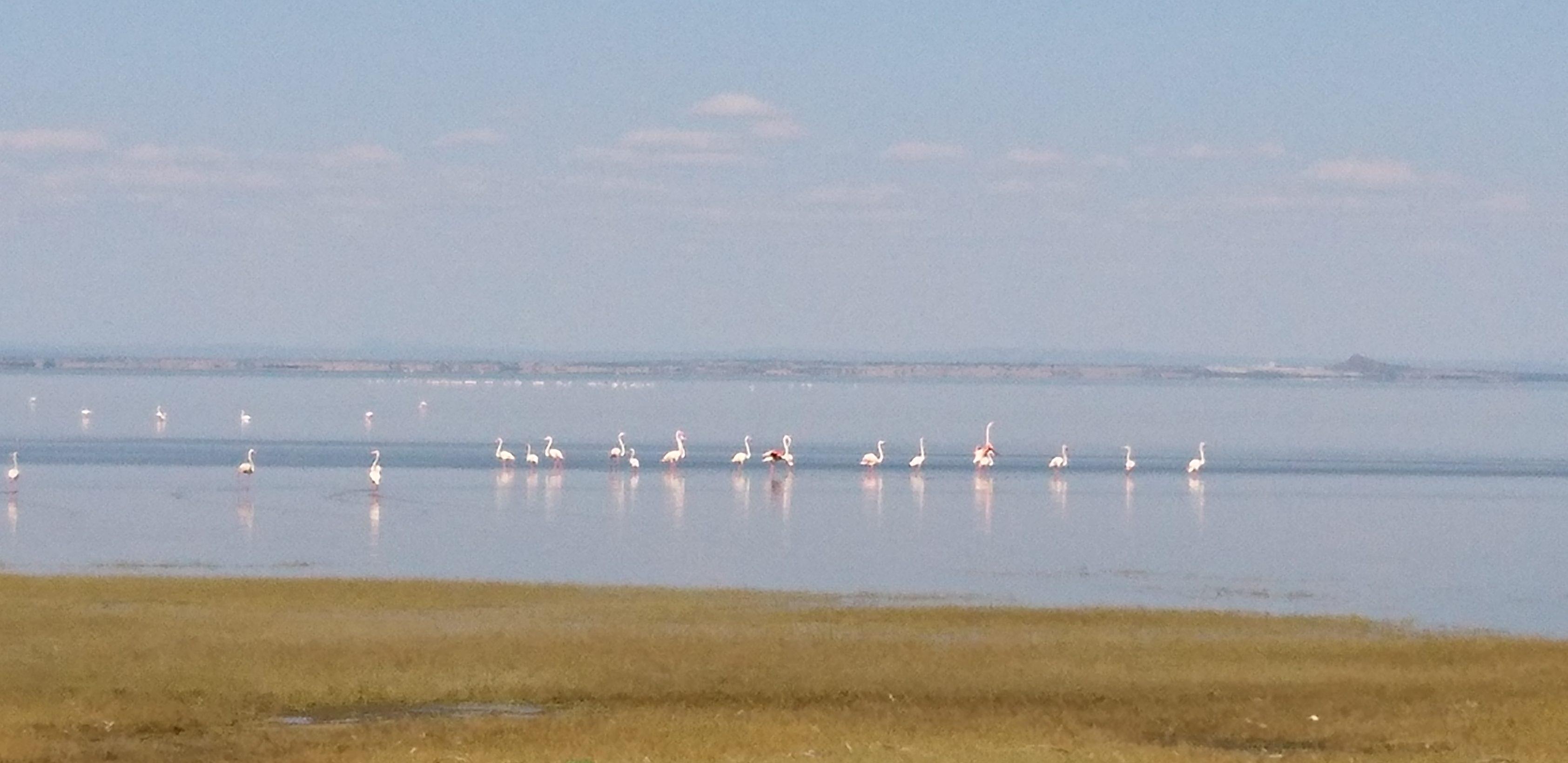 Flamingos Lake Manyara