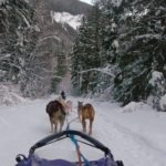 Dog Sledding Jasper
