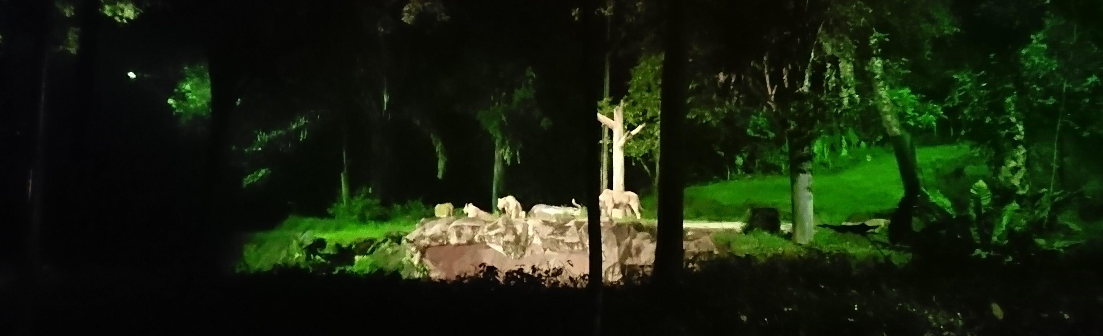 Lions Night Safari Singapore