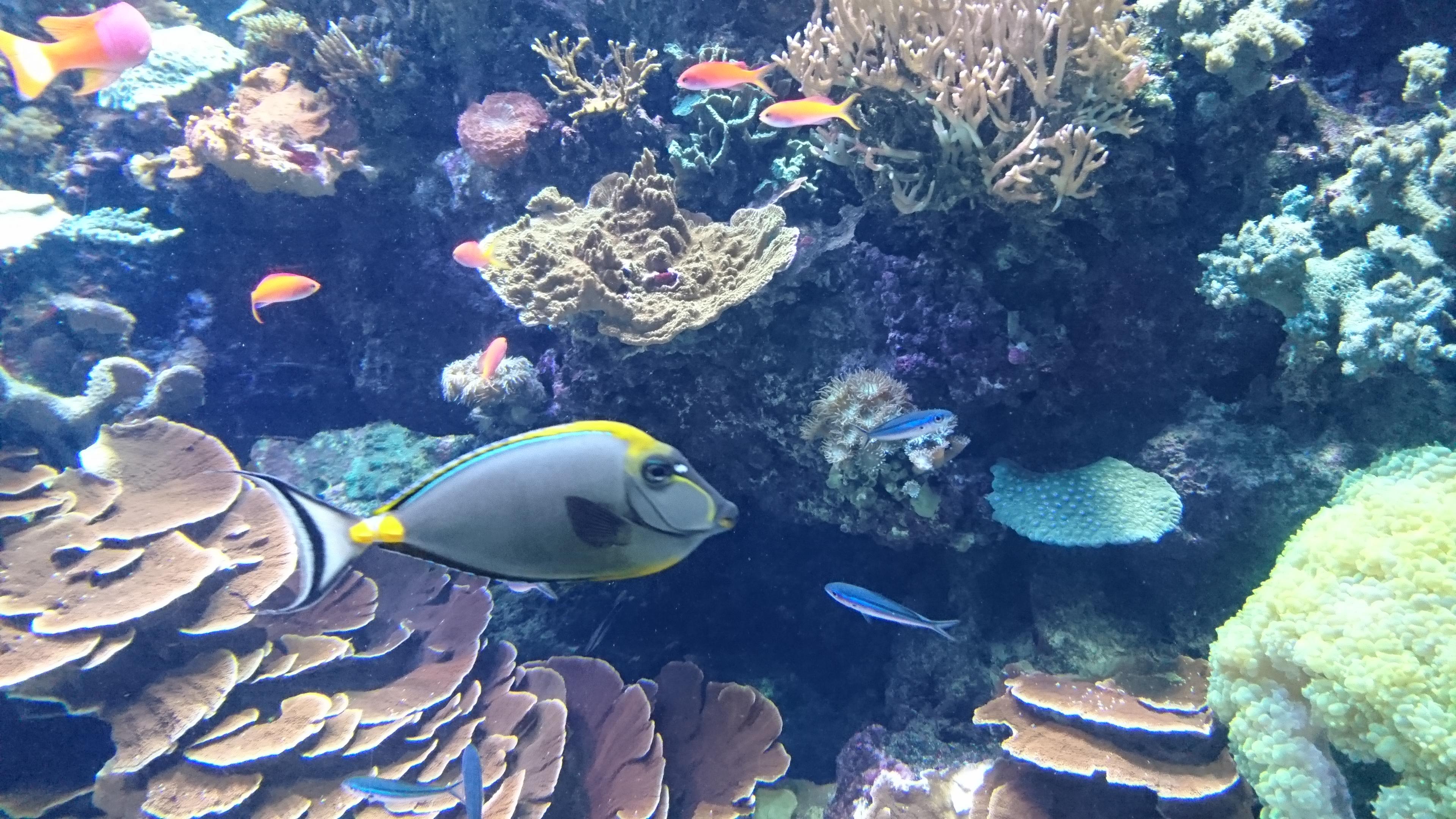 S.E.A. Aquarium; Singapore