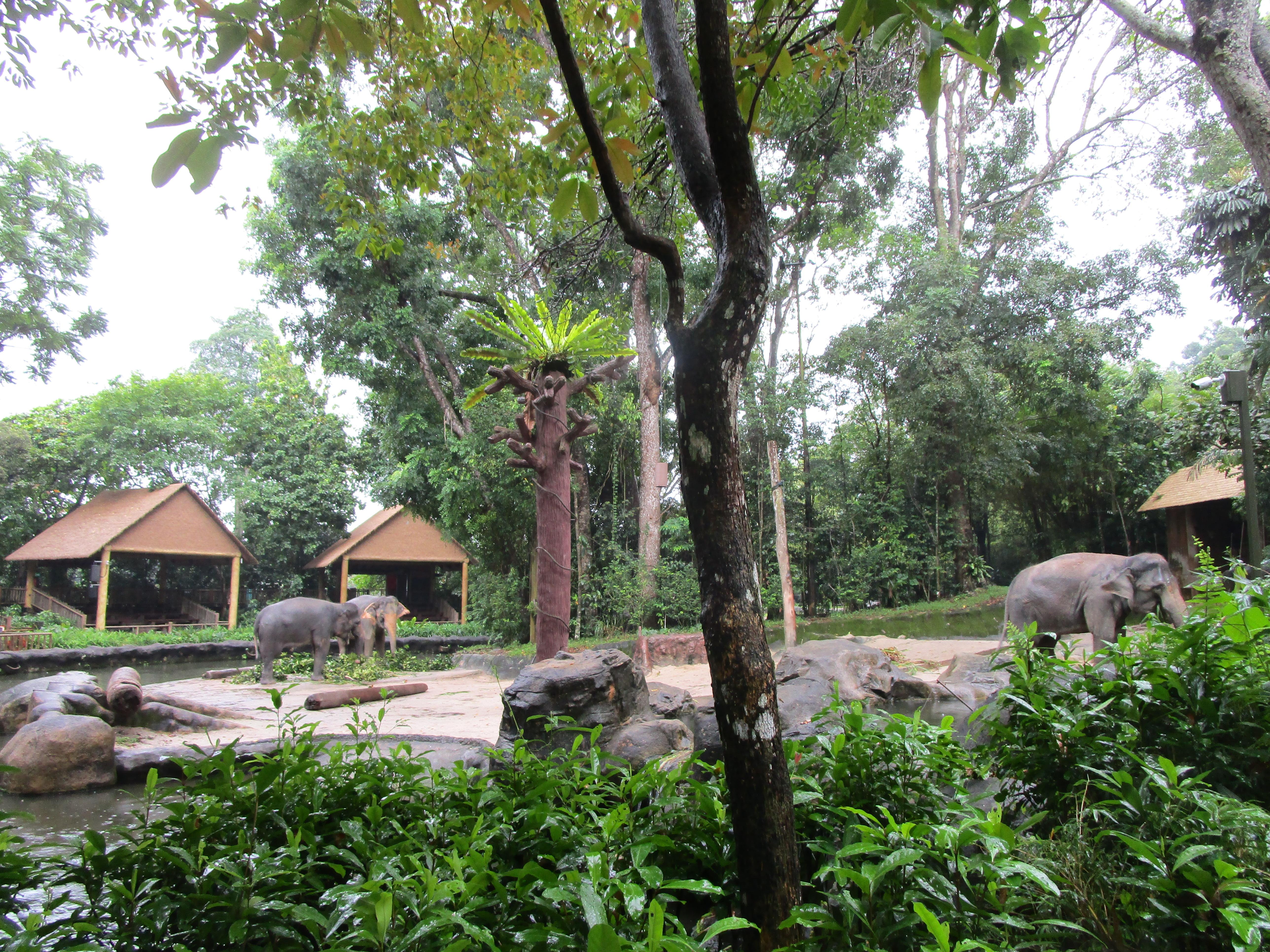 Elephants Singapore Zoo