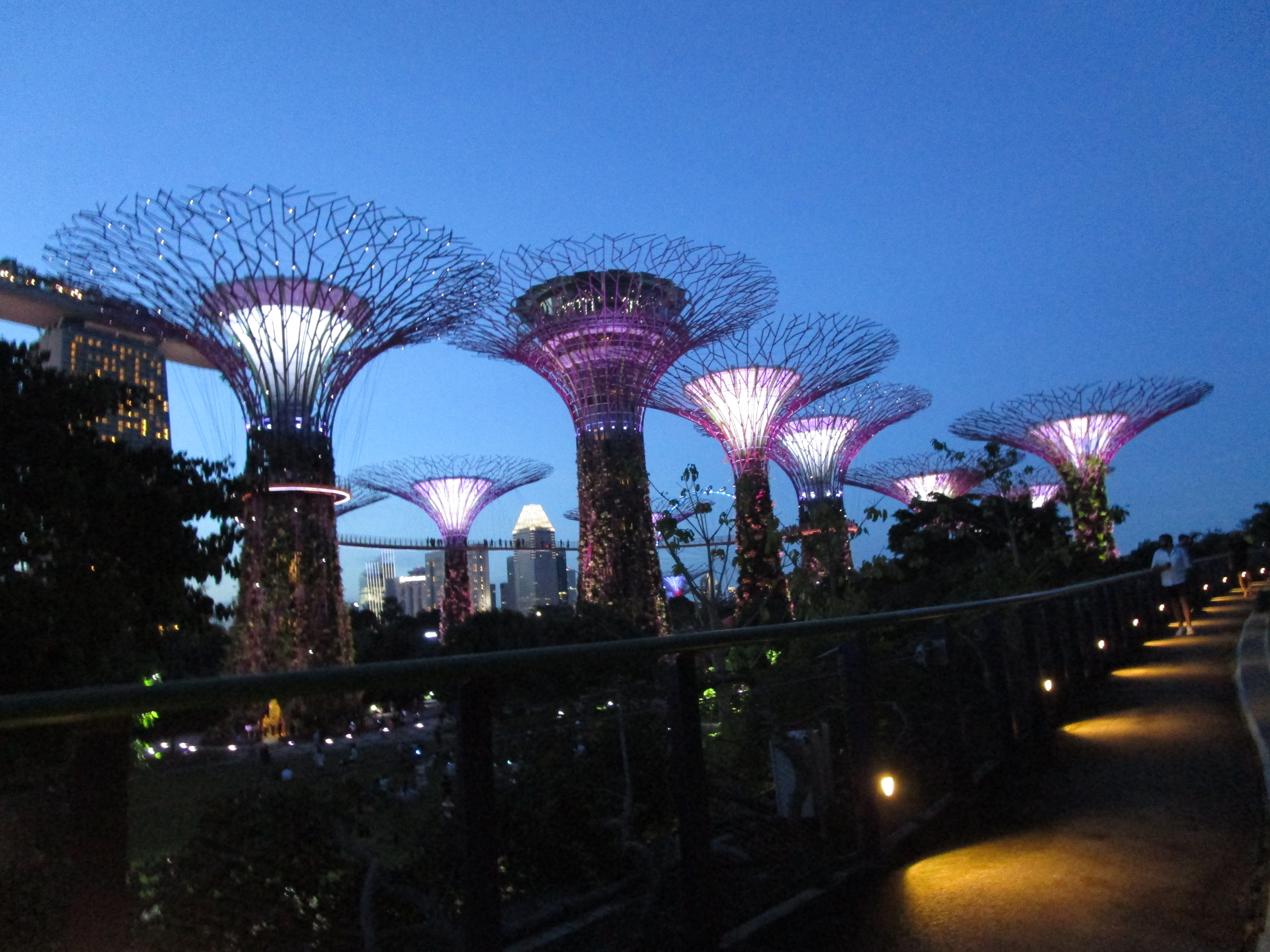 Sky Trees; Gardens by the Bay; Singapore