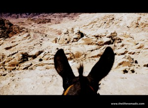 Donkey's Ear View