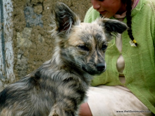 Peruvian puppy and his girl.
