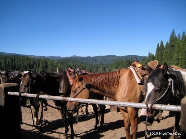 Ranch horses by Michael Sheehan via Flickr