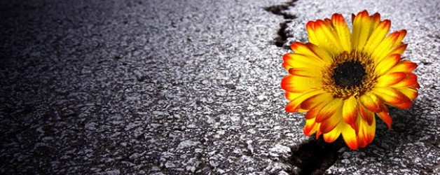 flower growing out of crack in the road