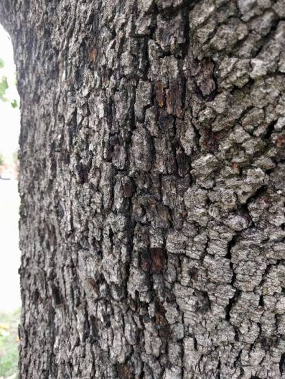 The bark, which scratched our arms and legs.