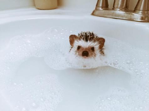 Koko Bath