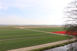 This picture is of the tulip fields at the beginning of April - they get better I'm sure!