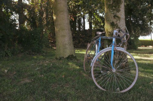 racer bicycle leaning against a tree
