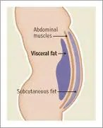 Intra-abdominal fat