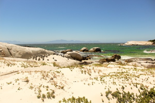 Boulders Beach Cape Xtreme Tour-Cape Town-South Africa