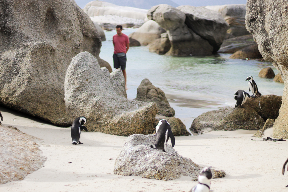 Boulders beach - cape town - south africa