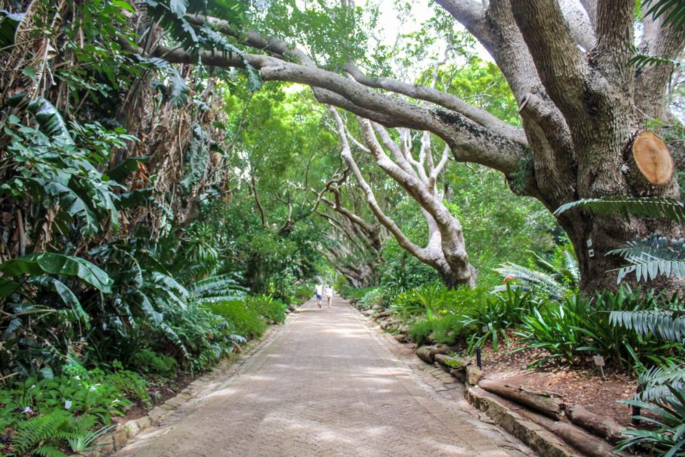 Kirstenbosch - Cape Town - South Africa