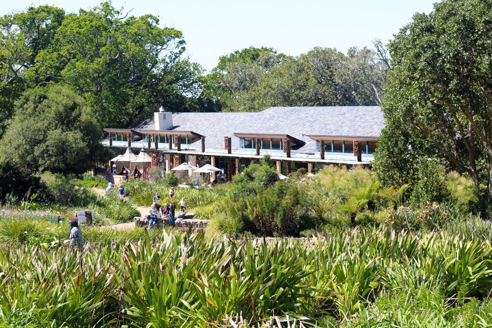 Kirstenbosch Botanical Garden - Cape Town - South Africa