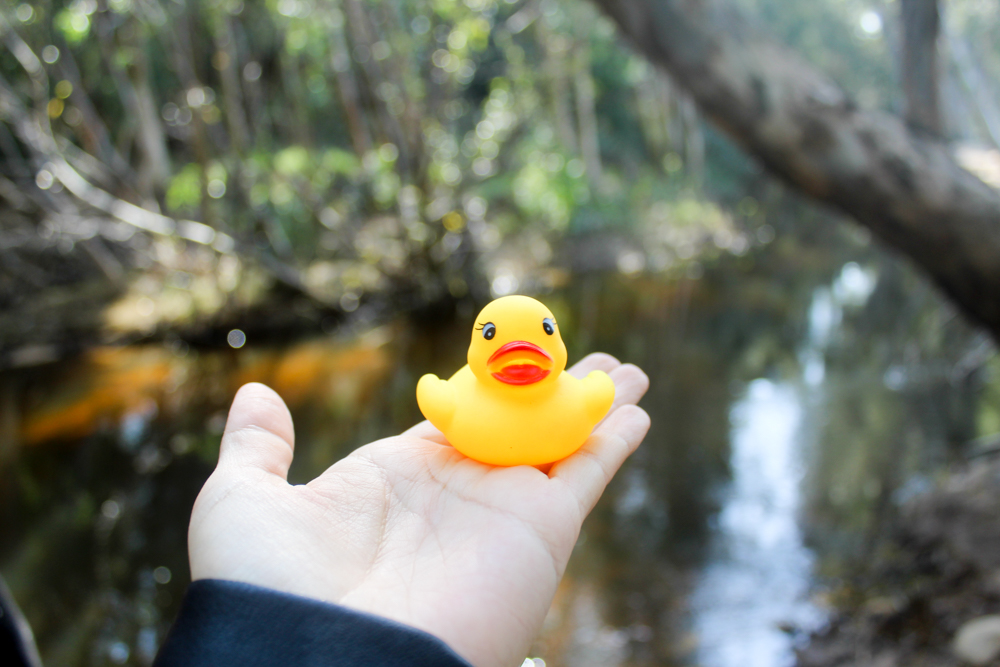 Day at the duck race - Tulbagh - South Africa