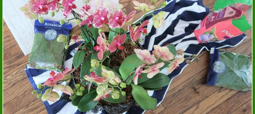 Making a Floral Centerpiece