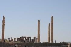 Shiraz-7769