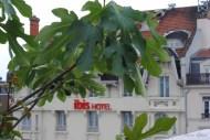 Lyon-8694