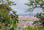 Lyon-8733
