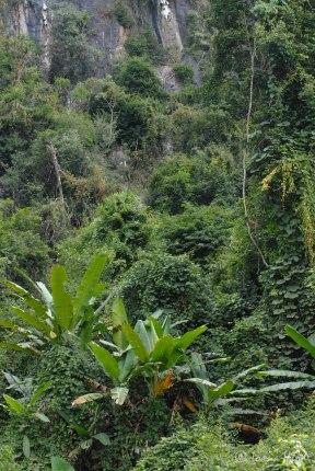 Laos-4121