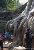 Cambodia-5733