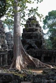 Cambodia-5784