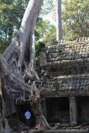 Cambodia-5896
