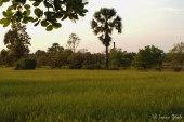 Cambodia-6103