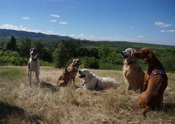 dog training choices