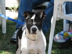 2008_04_20_Stanley_Puppy_Recess_Alert_SuppBTOnline_SHOP