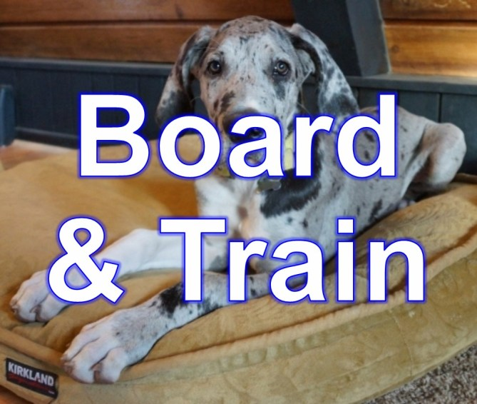board_train_1