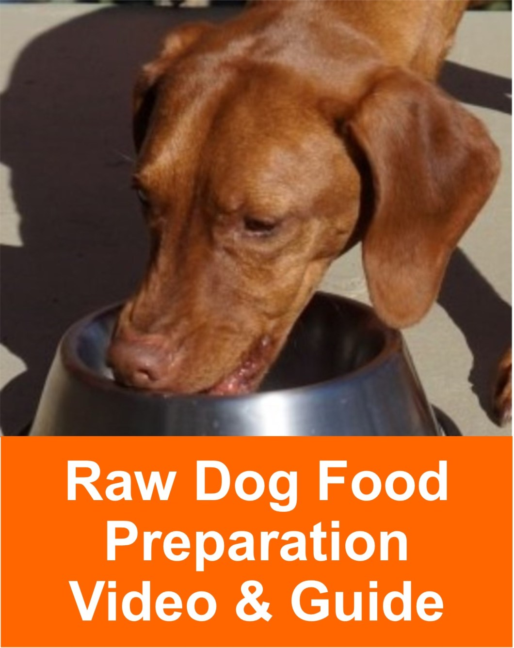Feed your dog Raw