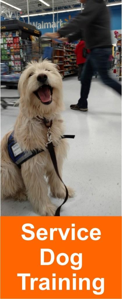 service_dog_training