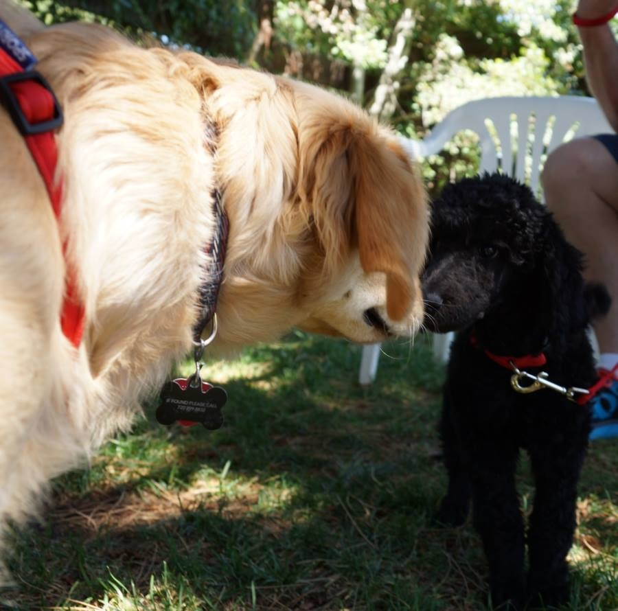 greet other dogs when on leash