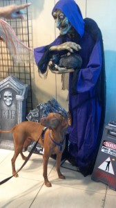 Romeo at the Halloween store a few years ago