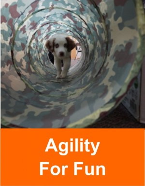 agility_for_fun_2