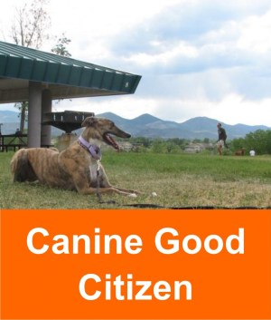 canine_good_citizen_2