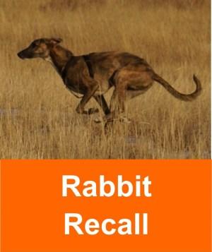 rabbit_recall