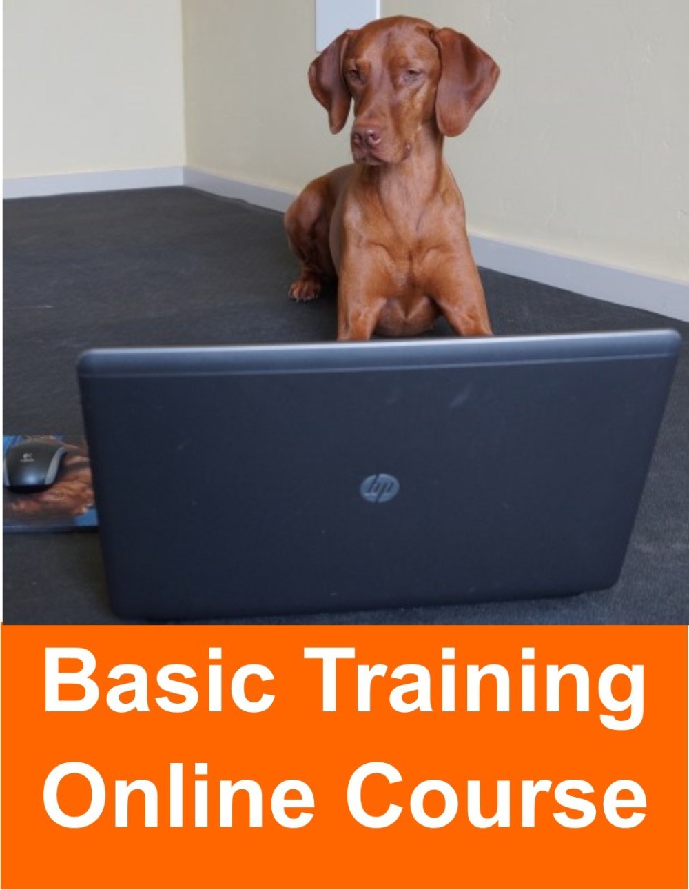 Basic Dog Training Online Course