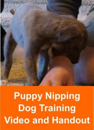 puppy_nipping_module