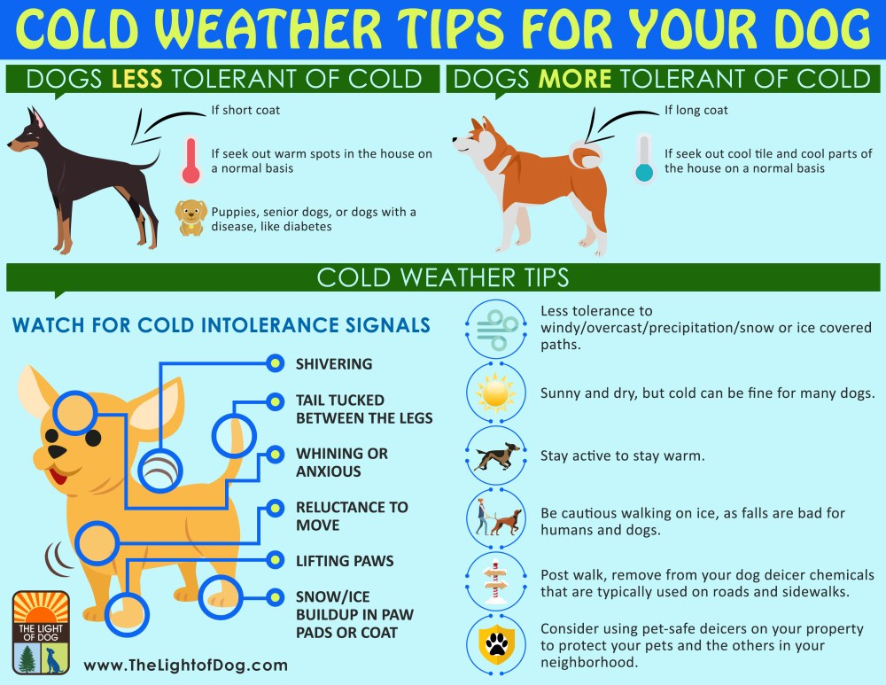 Cold weather tips for your dog