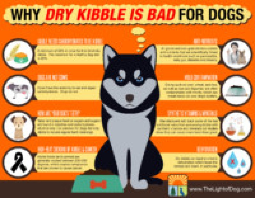 dry kibble is bad for dogs