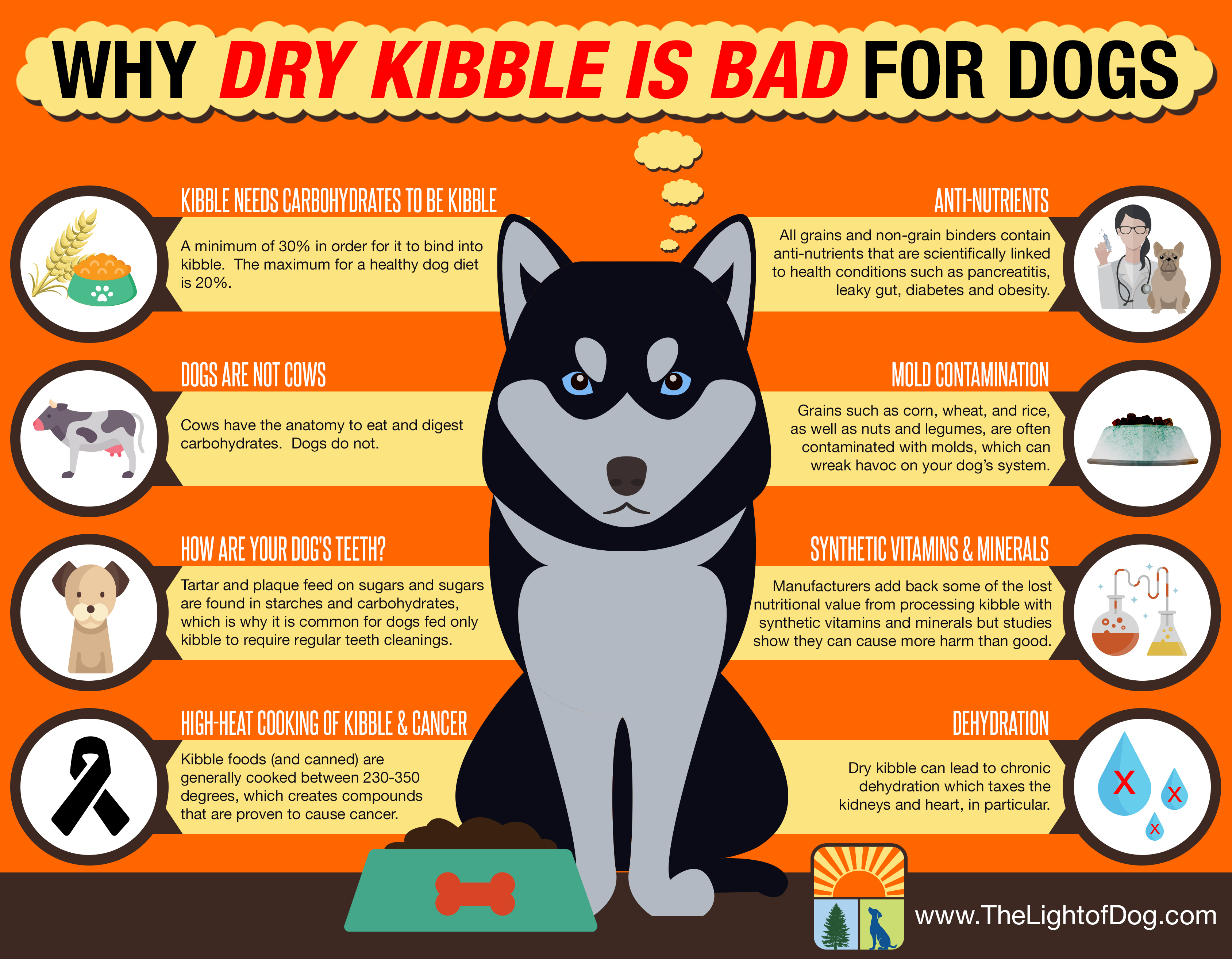Why dry kibble is bad for dogs - The Light Of Dog
