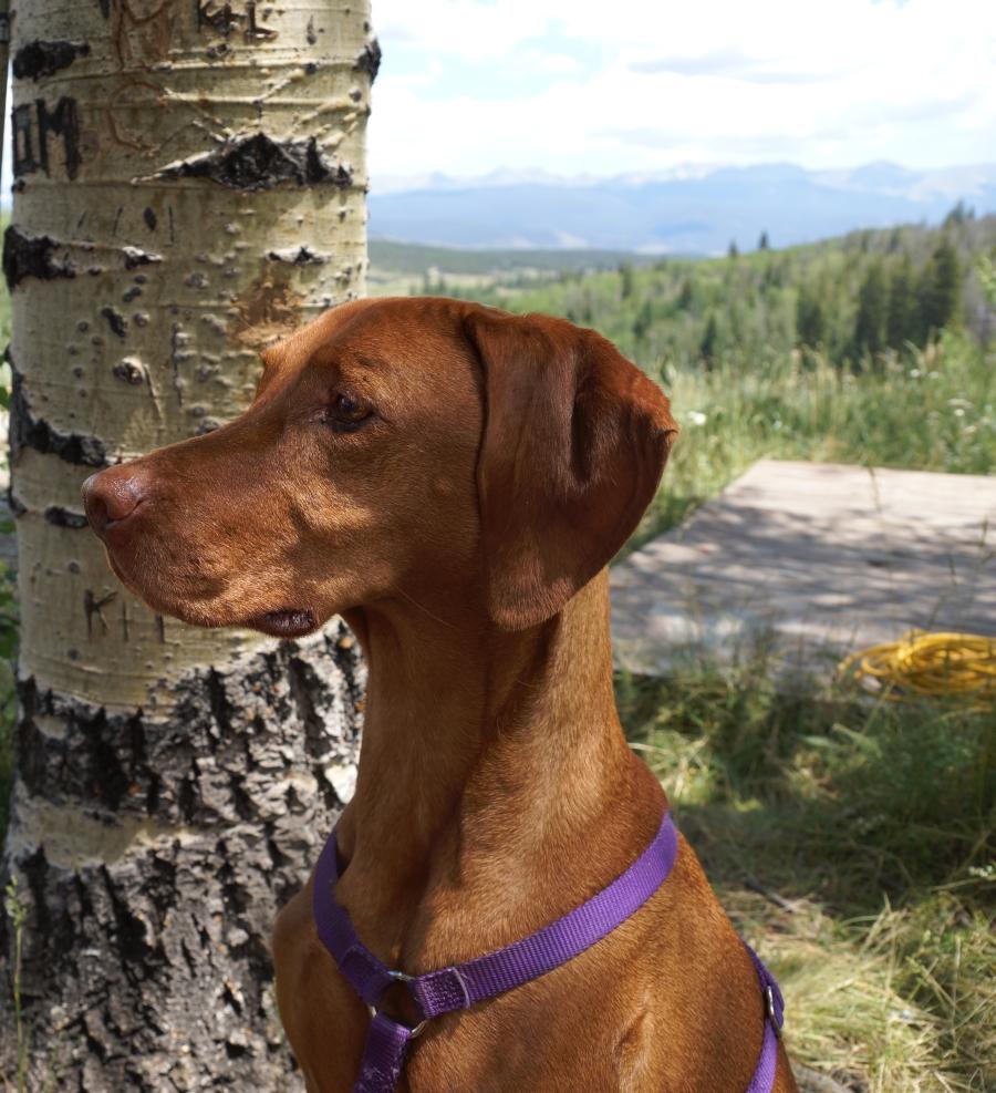 Romeo at Snow Mountain Ranch