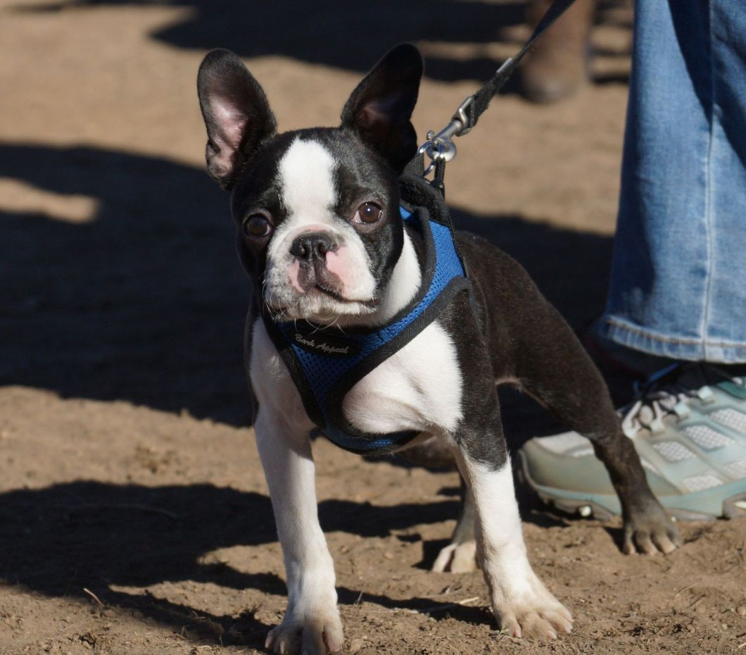 Walking with your dog: are you both tuned in?