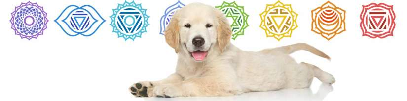 This image has an empty alt attribute; its file name is dogs-have-chakra-centers-tiny.jpg