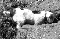 200612 LM digging dog