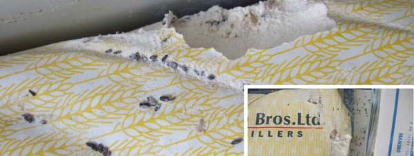 Mouse droppings and gnawing on a bag of flour in a storage unit behind Sarga Indian restaurant, discovered by North Kesteven District Council inspectors in October 2012.