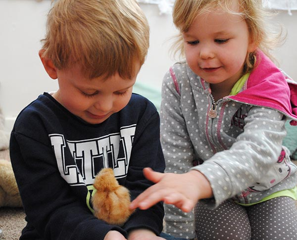 Jack Smith (3) with Jessica Margrett (3) as they hold one of the new chicks.